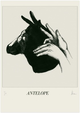 Antelope © Kareena Zerefos