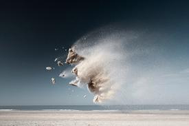 Sand Creatures #2 © Claire Droppert