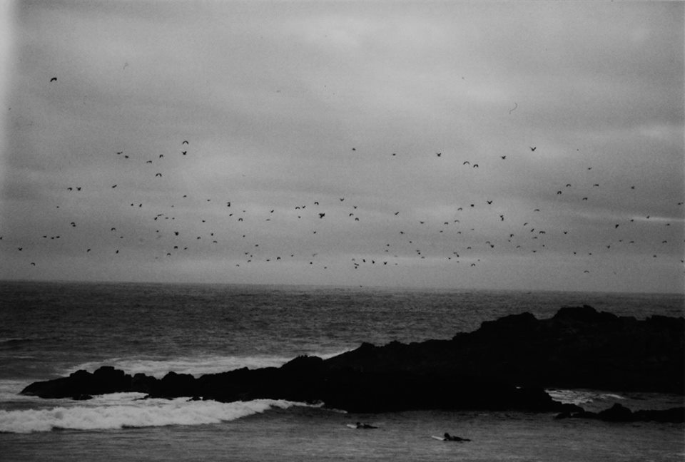Birds Over Bay © Tobias König